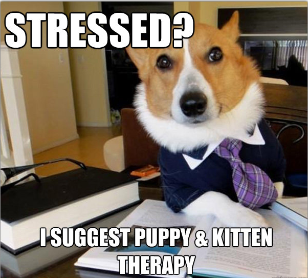 lawyer-dog-stressed