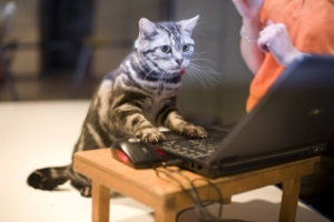 cat-blogging